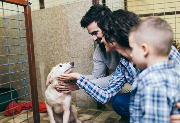 Family at animal shelter adopting a dog
